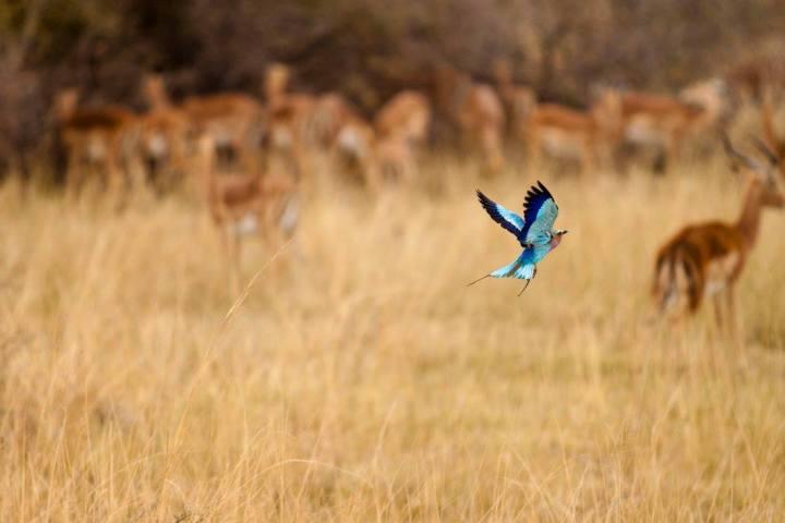 SouthAfricanBird