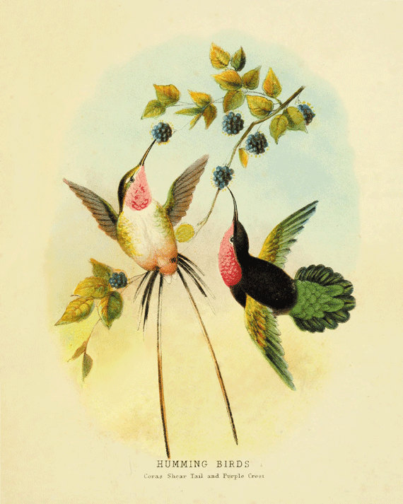THE SPEAKING HUMMINGBIRDS